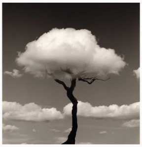 arbol-nube-chema-madoz