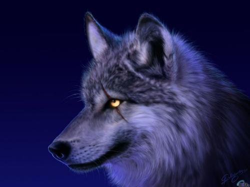 Los ojos del lobo | PiLees