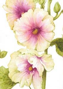Ilustraciones-de-flores-Jan-Harbon-4