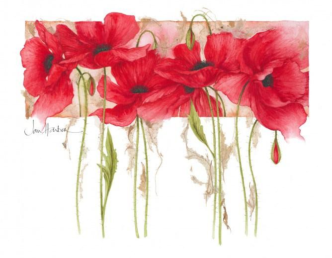 Ilustraciones-de-flores-Jan-Harbon-5